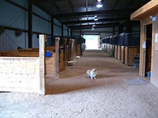 Horse Boarding Woodbridge Virginia