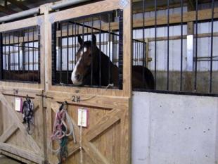 Horse Boarding Northern Virginia